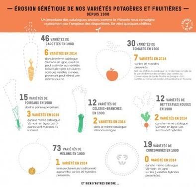 73 variétés de melons en 1900. Une seule en 2014 | Questions de développement ... | Scoop.it