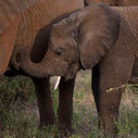 Conservation Militias Fight Poaching in Kenya | Conservation Biology, Genetics and Ecology | Scoop.it