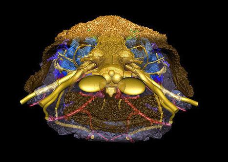 Un visage vieux de 415 millions d'années | Merveilles - Marvels | Scoop.it