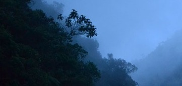Colombia's Cloud Forests Besieged by Climate Change | Climate Central | The Glory of the Garden | Scoop.it