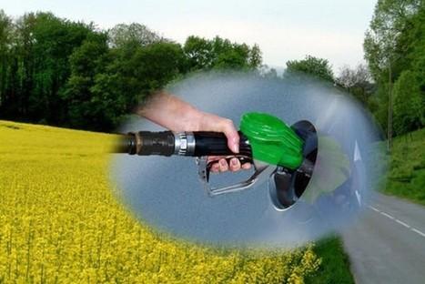 Le biodiesel trop grand consommateur d'huile de palme | Confidences Canopéennes | Scoop.it