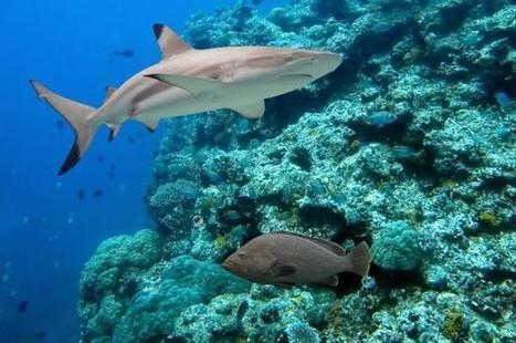 Climate change is dulling the survival instincts of fish | All about water, the oceans, environmental issues | Scoop.it