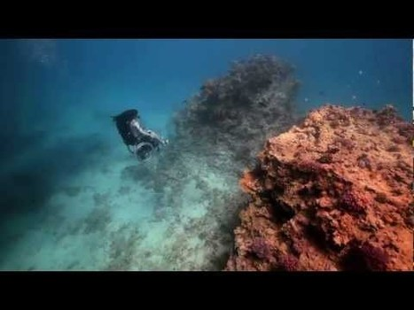 This Woman Created an Underwater Wheelchair to Feel the Freedom of SCUBA   Scuba Diving Adventures   Scoop.it