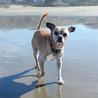 Dog Health Advocacy
