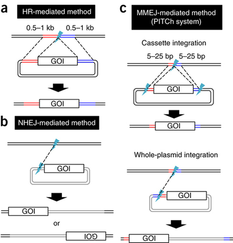 MMEJ-assisted gene knock-in using TALENs and CR