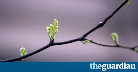 UK light pollution 'causing spring to come a week earlier' | 100 Acre Wood | Scoop.it