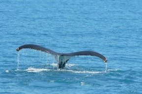 Massive study of Kimberley marine life planned - ABC News (Australian Broadcasting Corporation) | Aquatic Viruses | Scoop.it