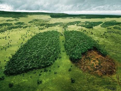 Contaminación | Qué es, Clases, Naturaleza y Hombre, Soluciones - ElBlogVerde.com | Infraestructura Sostenible | Scoop.it