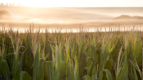 American Farmers Say They Feed The World, But Do They? : NPR | flamebelly | Scoop.it