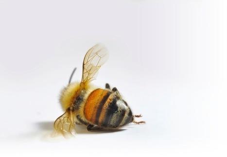 Les abeilles officiellement reconnues comme espèce en voie de disparition | Les coups de coeur de D'Dline 2020 | Scoop.it