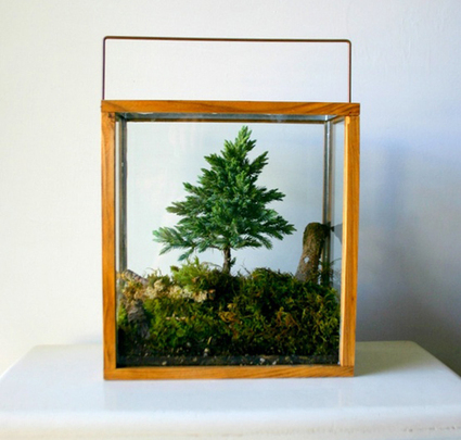 MilkWeed: Go Green During Winter with Terrariums - Design Milk | What Surrounds You | Scoop.it