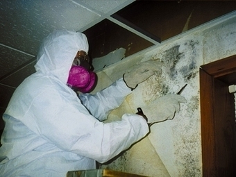MoldFixer - A San Diego Mold And Water Damage Company | Mold Fixer | Scoop.it