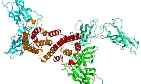 The molecular mechanism that blocks membrane receptors involved in immunological response are identified | Scientific Innovations in Biology | Scoop.it