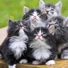 Cute Catty