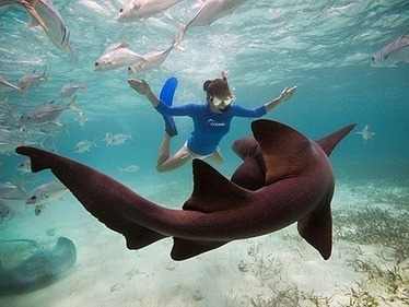 Kate Walsh Swims with Sharks in Belize | Filmbelize | Scoop.it