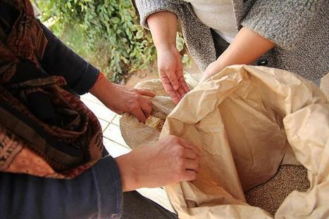 Des semences libres pour délivrer les paysans des géants agro-industriels | (Culture)s (Urbaine)s | Scoop.it