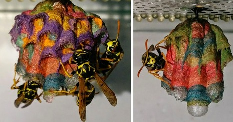 When Wasps Are Given Colored Paper, They Build Rainbow Nests | The Landscape Café | Scoop.it