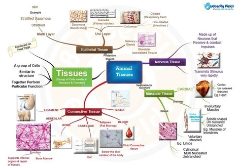 Human Tissue Concept Map.Types Of Animal Tissues Concept Map Diy Sci