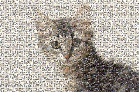 Ça marche aux poils #1 : les vidéos de chats font recette | Les chats c'est pas que des connards | Scoop.it