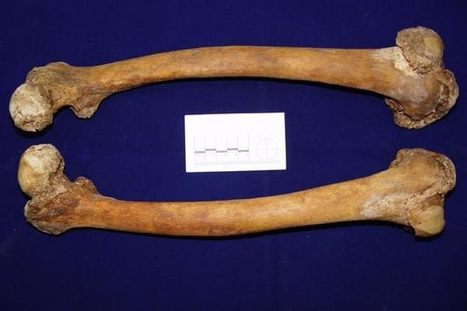 No Bones About It: Technology Made Ancient Humans Less Active - LiveScience.com   The Future of Mankind   Scoop.it