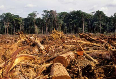 People Are Getting Sick Because of EnvironmentalDestruction | Biodiversity IS Life  – #Conservation #Ecosystems #Wildlife #Rivers #Forests #Environment | Scoop.it