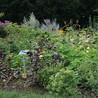 Garden Design & Jardins d'exception