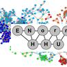 E-Norm: Evolutionary Networks, Organisms, Reactions, Molecules