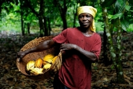Akuafo Adamfo to help farmers boost cocoa production | Fairly Traded News | Scoop.it