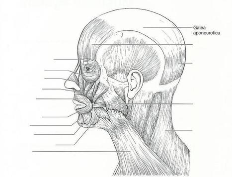 Human anatomy head and neck pdf download sako human anatomy head and neck pdf download fandeluxe Gallery