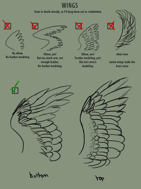 How To Draw Wings Reference Guide Drawing R