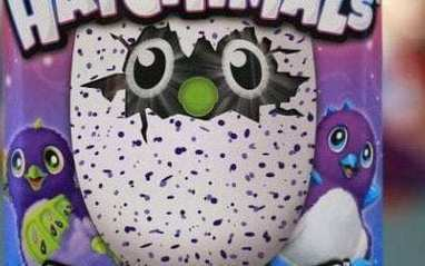 Parents claim Hatchimals are mumbling swear words in their sleep. @investorseurope #culture | Culture, Humour, the Brave, the Foolhardy and the Damned | Scoop.it