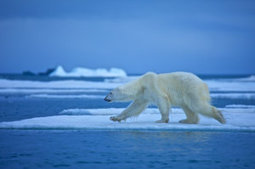 Climate change study reveals unappreciated impacts on biodiversity | Biodiversity protection | Scoop.it
