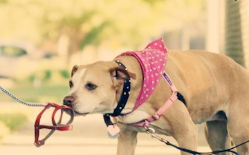 How One Company Saved Thousands of Dogs Using Social Media | Social Media Follows | Scoop.it