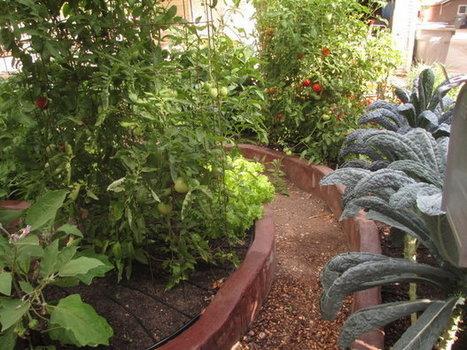Margaret Lauterbach: A remarkable edible garden in Boise's North End   Margaret Lauterbach: Gardening   Idahostatesman.com   edible landscaping   Scoop.it