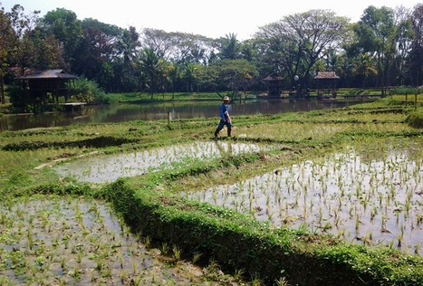 India to pass Thailand in rice exports | Thailand Business News | Scoop.it