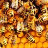 La recherche en apiculture