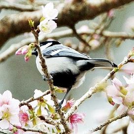 Daftar Harga Burung Gelatik Berbagai Jenis Terb