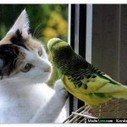 A funny cat and a bird talk each other | A dogs help in a man | Scoop.it