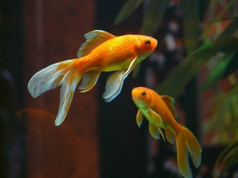 Bob's Grammar Aquarium | The Merit School Magazine | Scoop.it