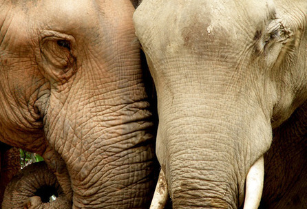 Futurity.org – GPS collars keep track of wild elephants | Land Surveyors | Scoop.it