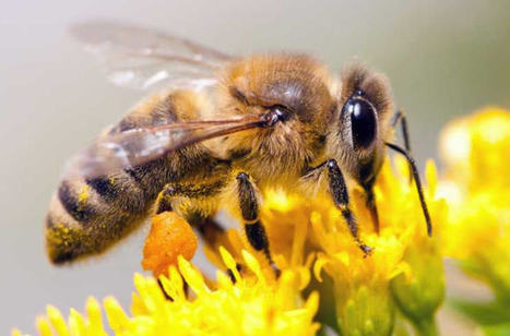 What Honeybees Can Teach Marketers | Biomimicry | Scoop.it