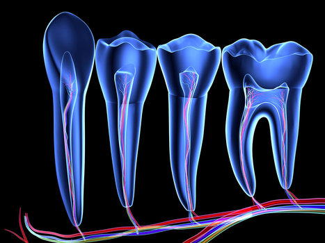 Unexpected stem cell factories found inside teeth | leapmind | Scoop.it