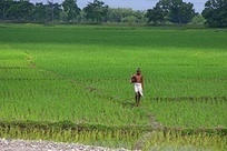 Roundtable brings high-tech farming ideas to India's risk-prone ecologies | International Food Policy Research Institute (IFPRI) | A Better Food System | Scoop.it