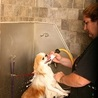 Dog Daycare Rochester NY
