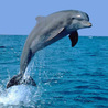 Amazing Animal in the Planet