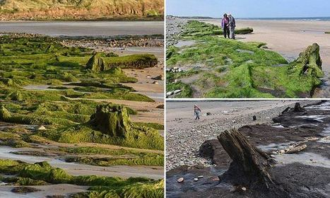 North Sea reveals forest buried for 7,000 years and human footprints | microburin mesolithic archaeology | Scoop.it