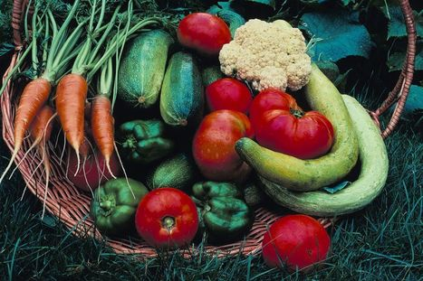 New Haven Farms, Gardens Are New Prescription for Health for Many City Residents   Sustainability: Permaculture, Organic Gardening & Farming, Homesteading, Tools & Implements   Scoop.it