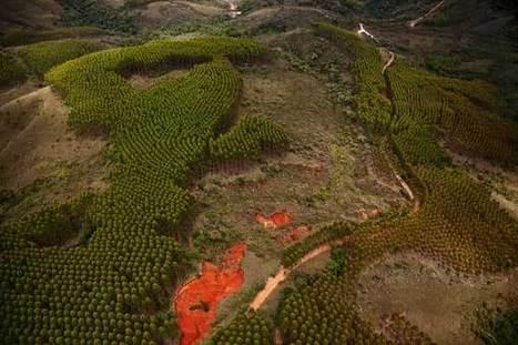 Paradise regained? - FT.com | Brazilianisms | Scoop.it