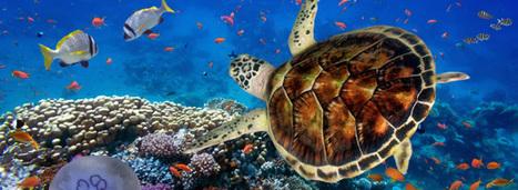 Ségolène Royal dévoile la feuille de route de l'Agence française pour la biodiversité | Planete DDurable | Scoop.it