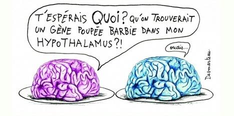 Notre cerveau a-t-il un sexe ? | Mission égalité homme femme | Scoop.it